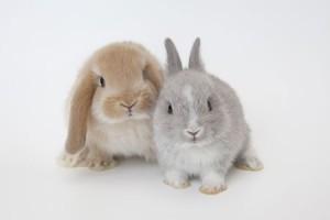 ฝันเห็นกระต่าย