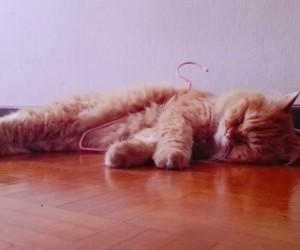 ฝันเห็นแมว ฝันเห็นแมวหลายตัว ผลคำทำนายฝัน