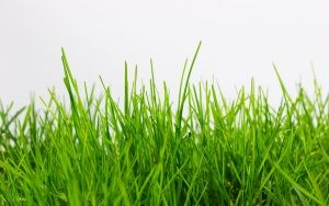 ฝันเห็นหญ้า