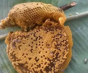 ฝันเห็นรังผึ้ง ฝันว่าตีรังผึ้ง ฝันเห็นรังผึ้งในบ้าน ผลคำทำนายฝัน